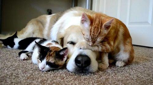 犬 猫 ペット 飼育 ペットフード協会 調査結果に関連した画像-01
