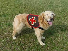 エクアドル 地震 救助犬 激務に関連した画像-01