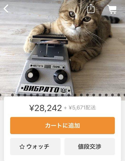 音楽機材出品写真ネコに関連した画像-04