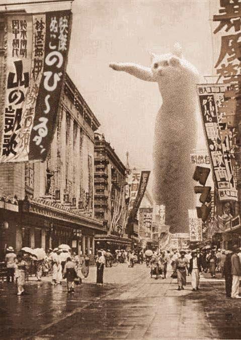 猫 のびーるたん コラ画像 長い long cat is longに関連した画像-05