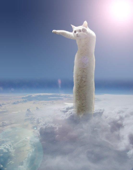 のびーるたん 猫 現在 寿命 長いに関連した画像-08