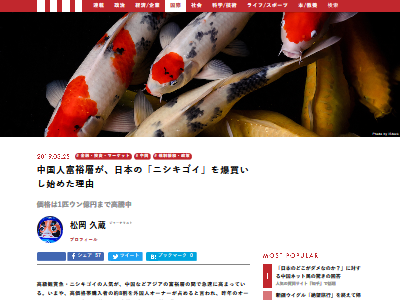 中国富裕層 ニシキゴイ 爆買いに関連した画像-02