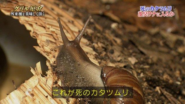 TOKIO カタツムリ 鉄腕ダッシュに関連した画像-08