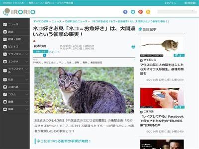 猫 魚に関連した画像-02