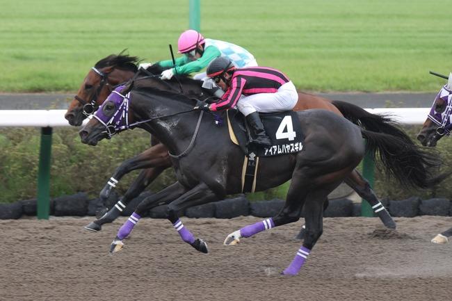 競馬 レース オヌシナニモノ アイアムハヤスギル 中山レース場 初風S 初風ステークス ワンツーフィニッシュに関連した画像-03