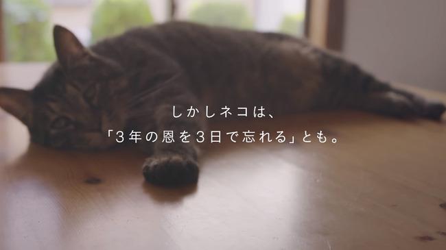 猫 かるかん 声 病気に関連した画像-07