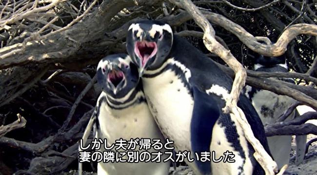 ペンギン NTR 残酷に関連した画像-01