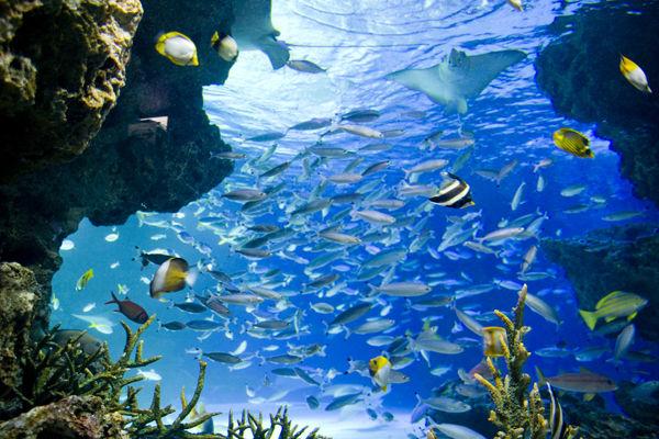 サンシャイン水族館 池袋 酸欠に関連した画像-01