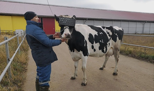 ロシア 牛 VRに関連した画像-03
