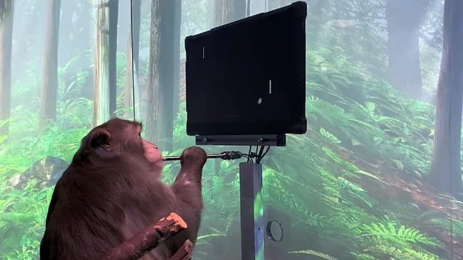 イーロン・マスク ニューラリンク サル 脳 チップ ゲームに関連した画像-01