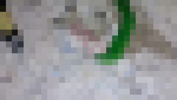 スライム 閲覧注意 ワームに関連した画像-01
