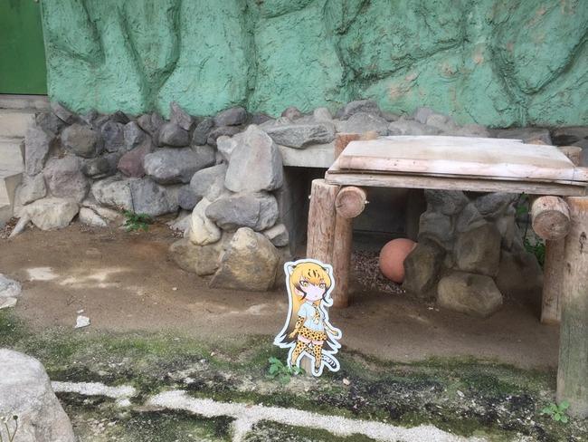 けものフレンズ 東武動物公園 コラボ パネル 動物 フレンズに関連した画像-04