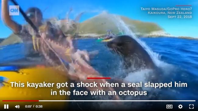 オットセイ タコ カヤック 殴打 ニュージーランドに関連した画像-03