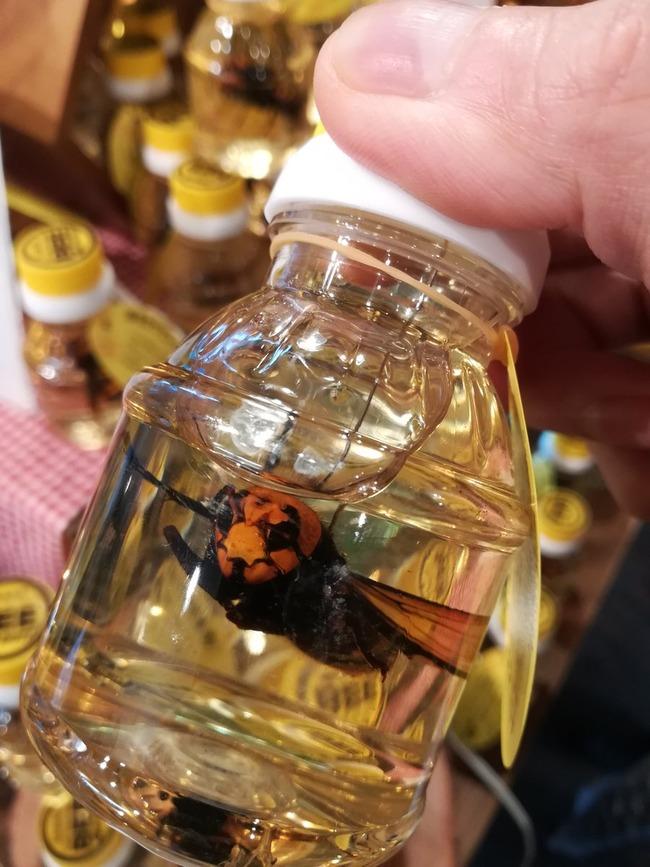 養蜂家 オオスズメバチ はちみつ漬けに関連した画像-02