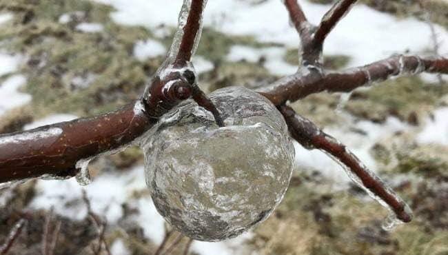 ゴーストアップル りんご 氷 自然に関連した画像-02