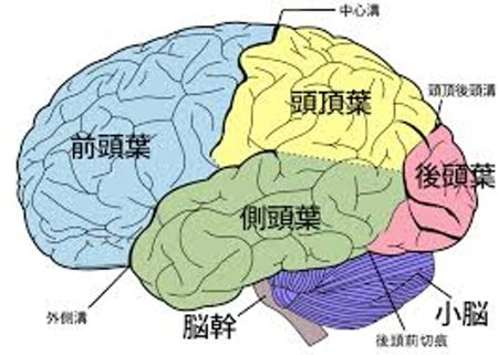 ゲーム脳 ブルゾンちえみ 人殺し フォボスに関連した画像-01