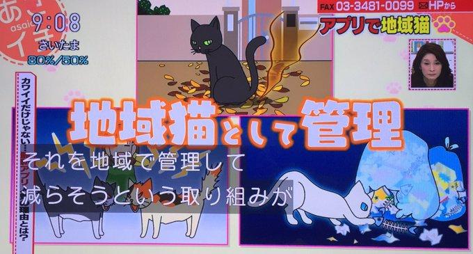 野良猫 地域猫 アプリ あさイチ 毒殺に関連した画像-03