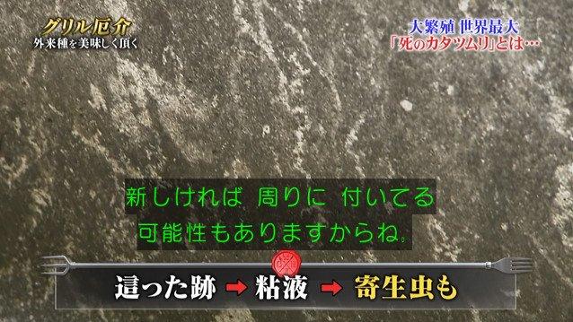 TOKIO カタツムリ 鉄腕ダッシュに関連した画像-06