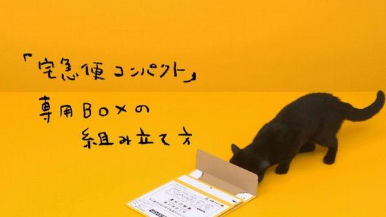 黒猫 組み立てに関連した画像-03