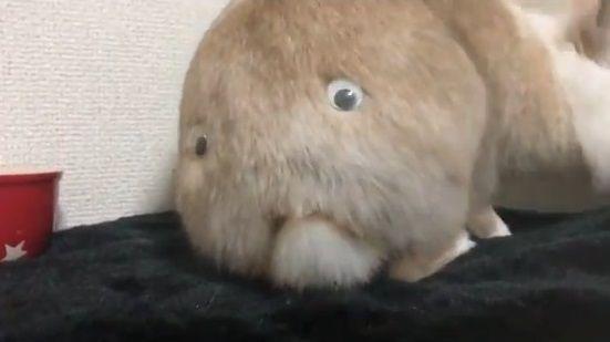 ウサギ 目ん玉 お尻に関連した画像-06