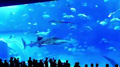 水族館 マグロ フラッシュ カメラ ツイッター デマに関連した画像-01