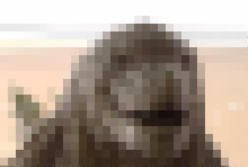 アニメ ゴジラ 顔に関連した画像-01