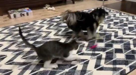 犬 ネコ 猫じゃらし ペットに関連した画像-02