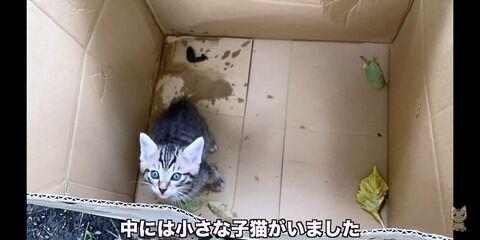 動物 YouTuber 猫 自演に関連した画像-03