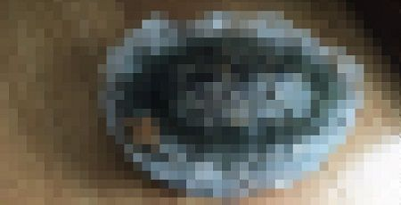 亀 氷漬け かめじろう 生命力に関連した画像-01