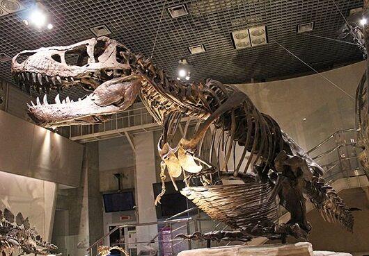 国立科学博物館VR見学に関連した画像-01