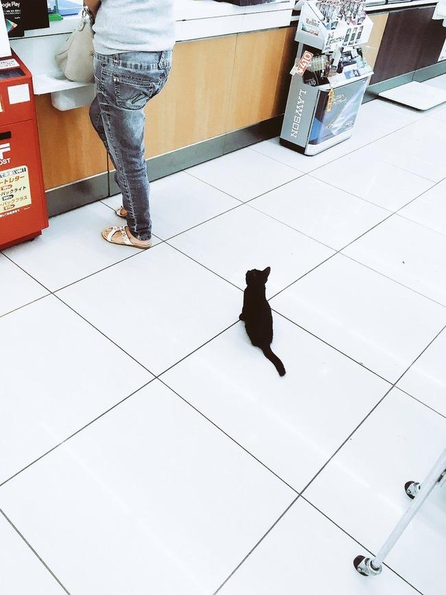 会計 レジ 黒猫 子猫に関連した画像-02