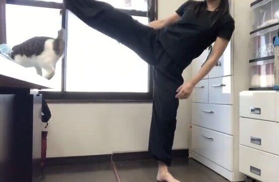 蹴り解説動画 猫乱入 癒やしに関連した画像-11