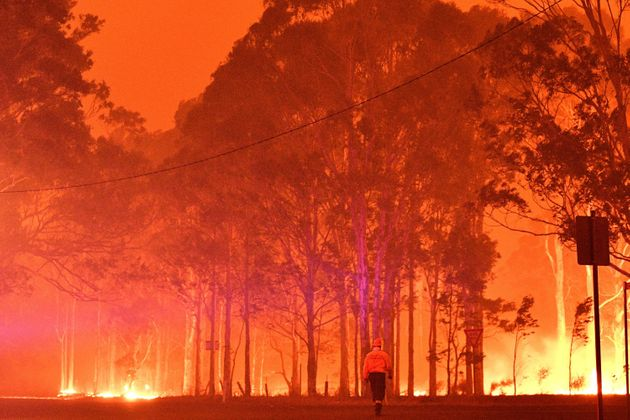 オーストラリア 火事 コアラに関連した画像-01