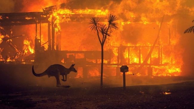 オーストラリア 森林火災 動物 被害 30億匹に関連した画像-01