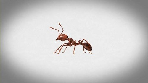 老人ホーム アリ 死亡に関連した画像-01