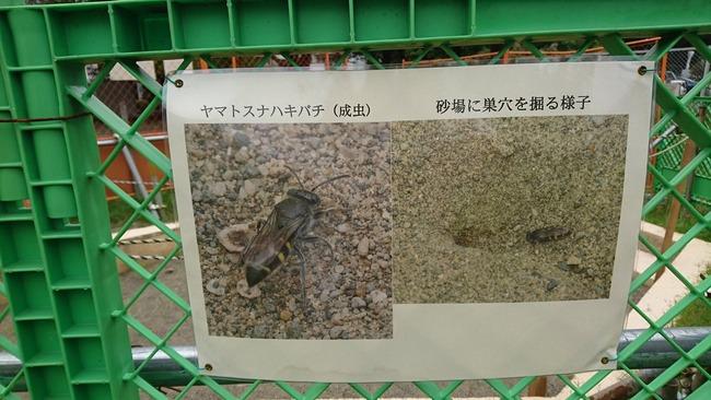 公園 砂場 使用中止 絶滅危惧種 ヤマトスナハキバチに関連した画像-04