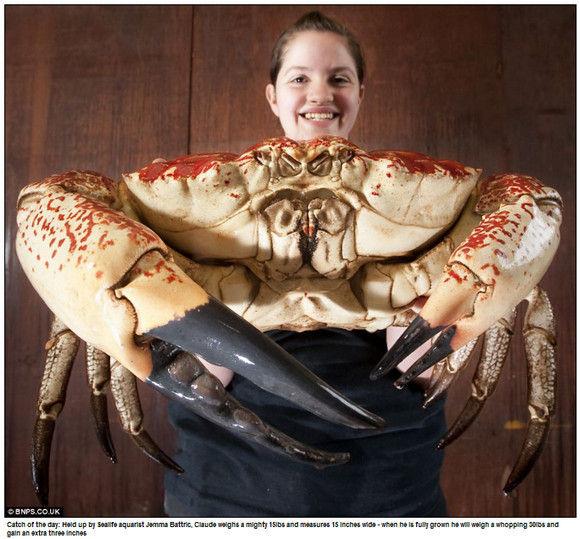 crab-monster