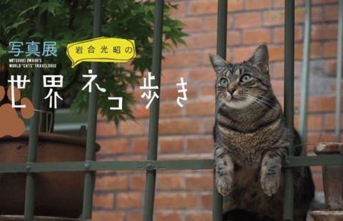 世界ネコ歩き 岩合光昭 映画化 コトラ 未公開シーンに関連した画像-01