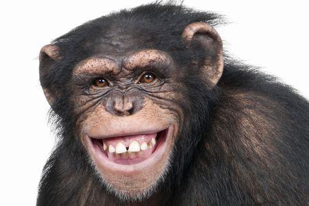人間 チンパンジー 手に関連した画像-01