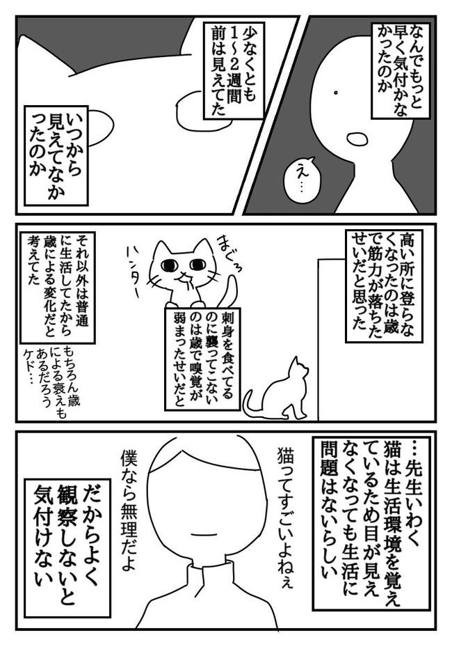 ネコ 失明 漫画に関連した画像-02