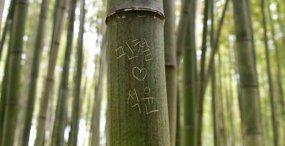 京都 観光地 竹林 落書き 外国人に関連した画像-01