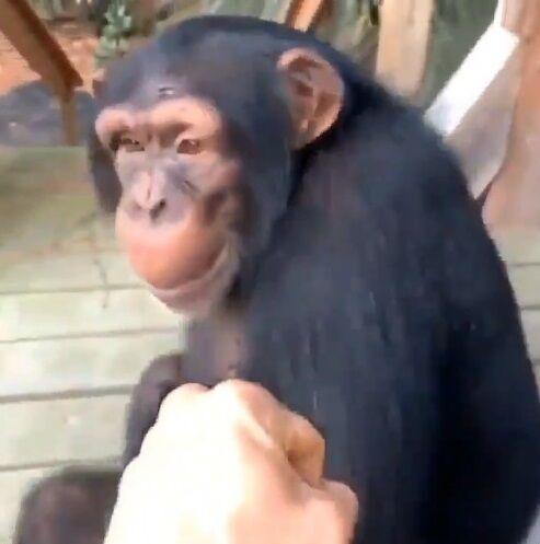 猿 人間 信頼関係に関連した画像-09