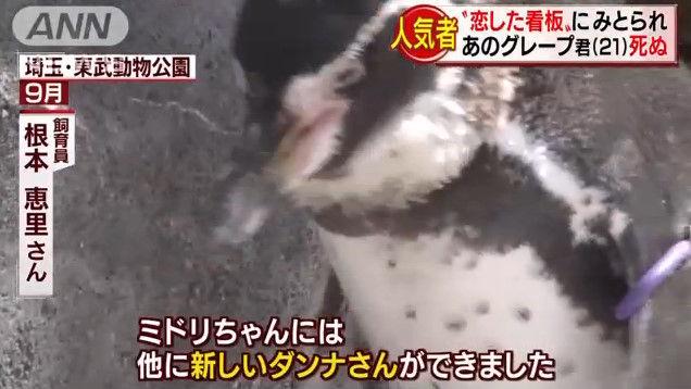 けものフレンズ けもフレ 東武動物公園 グレープ フルルに関連した画像-06