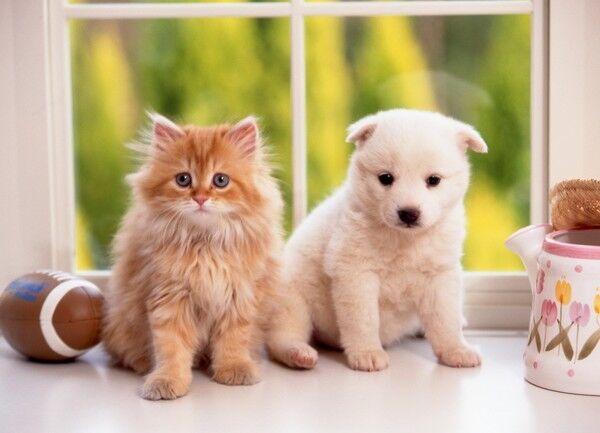 新型コロナウイルス 新型肺炎 ペット 犬 猫に関連した画像-01