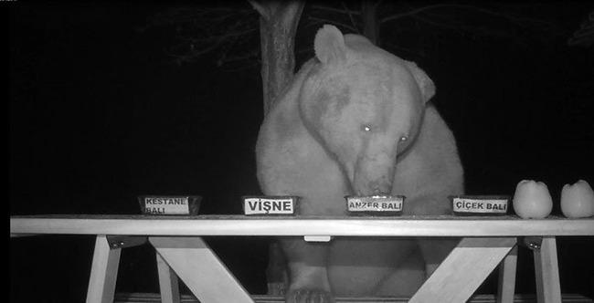 クマ 熊 対策 養蜂家 逆転 発送 に関連した画像-05