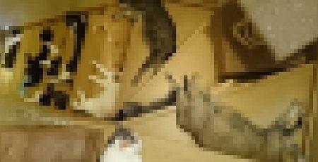猫 階段に関連した画像-01