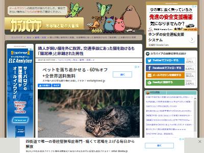 猫 交通事故 泥棒 隣人に関連した画像-02