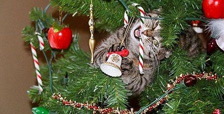 クリスマスツリー 猫 ネコ 対策に関連した画像-01