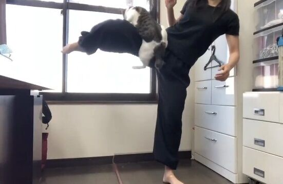 蹴り解説動画 猫乱入 癒やしに関連した画像-10