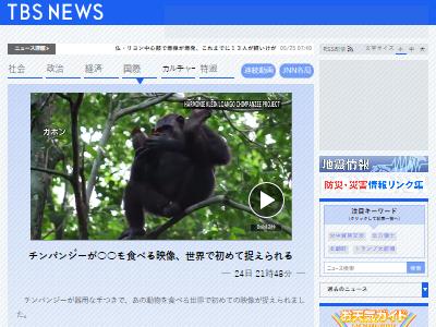 チンパンジーカメ食事映像に関連した画像-02